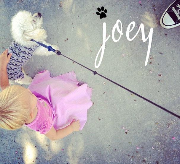 Joey Ko